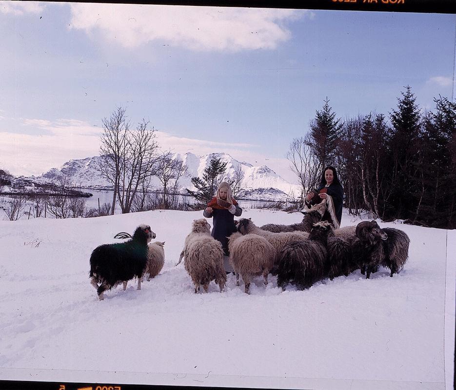 Viking Life© Nille Glæsel022